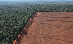 wmbd2011deforestation250x150specialiststock