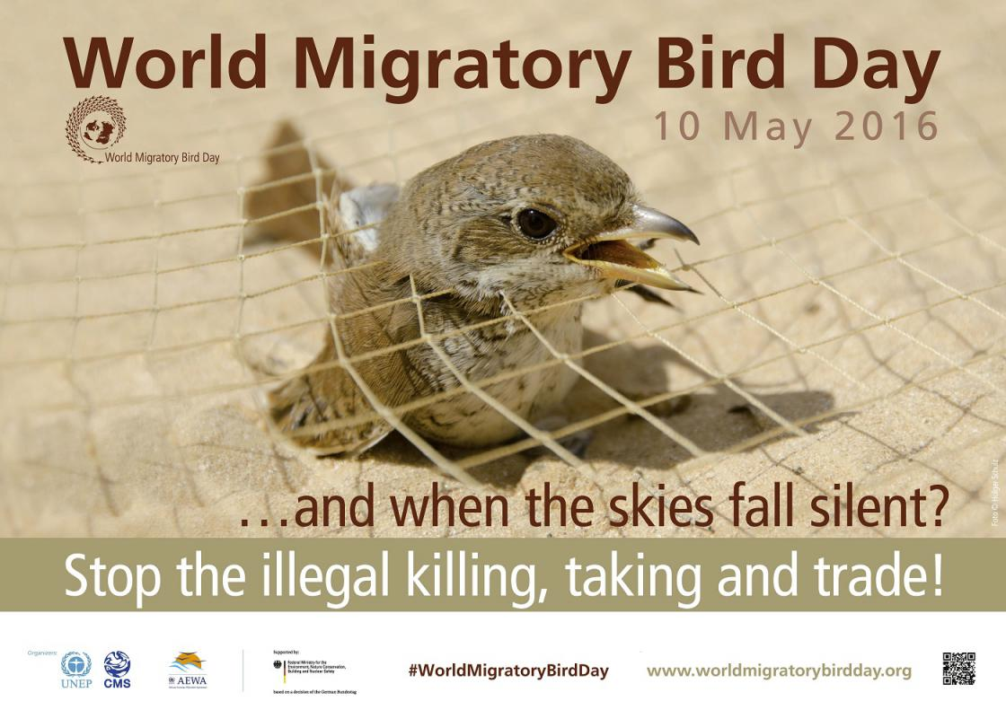 World Migratory Bird Day 2016 - Poster