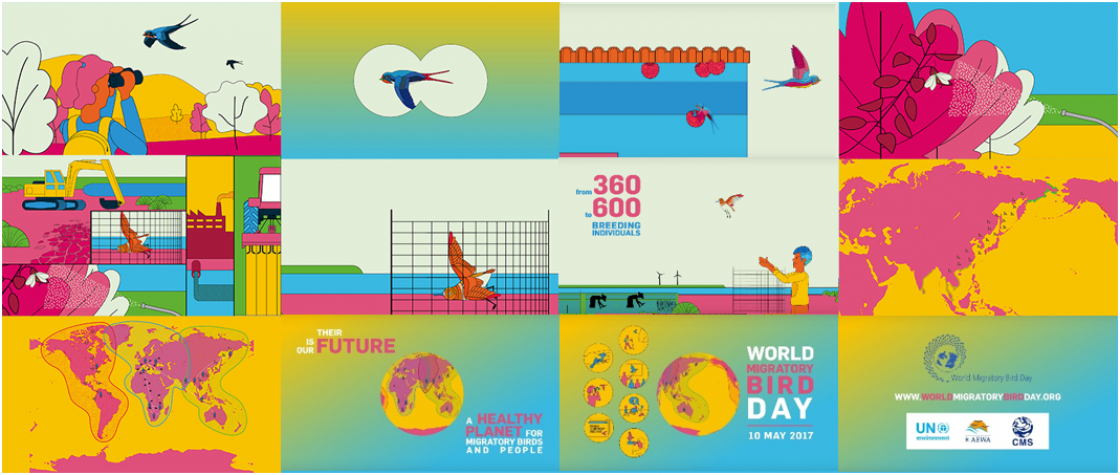 Storyboard of the Trailer of the World Migratory Bird Day 2017